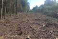 Расчистка участка от кустарников, мелколесья, деревь, Санкт-Петербург