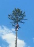 Валка деревьев. Спил деревьев. Спилить дерево