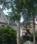 Валка, спил любых деревьев