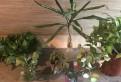 Отростки комнатных растений