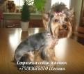 Стрижка, тримминг собак и кошек, выезд на дом по Спб, Санкт-Петербург