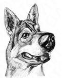 Картина графика лайнером «Собака»