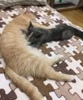 Рыжая кошка и котёнок