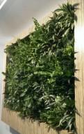 Фитодизайнер, специалист по внутреннему озеленению