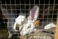 Домаш. яйцо, козье молоко, творог, мясо кролика, овощи