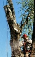 Спил аварийных деревьев удаление частями