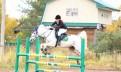 Учебные лошади, прогулочные лошади, молодняк