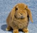 Карликовые кролики разных пород из питомника
