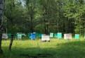 Мёд из Башкирии
