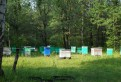 Мёд из Башкирии, Гатчина