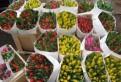 Свежие цветы к 8 марта, тюльпаны, Павлово
