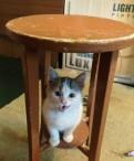 Бездомная кошечка мечтает стать домашней