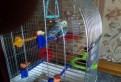 Два попугая и клетка, Кировск