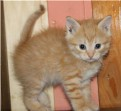 Домашние котики и кошечки