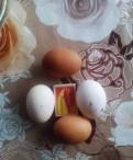 Продам домашние яйца, Гатчина