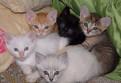Разноцветные котята в хорошие руки в Сиверском