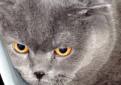 Голубой плюшевый кот для вязки
