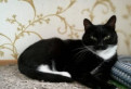 Черно-белая скромная, тихая кошка в добрые руки
