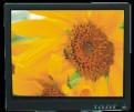 Монитор специальный для видеонаблюдения