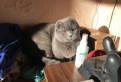 Котик для размножения