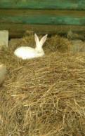"""Продам кроликов """"Белый великан"""", Вырица"""