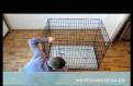 Клетки для собак, кошек. Для выставок и для дома