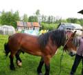 Лошадь, Дружная Горка