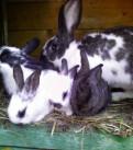 Продам кроликов, Павлово