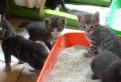 Отдадим в хорошие руки красивых котят