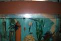 Продаются аквариумные рыбки, растения, корма