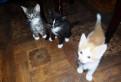 Котята от очень умной дворовой кошки крысоловки