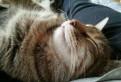 Кошка Монечка