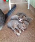 Два кота и кошечка