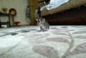 Полосатые котята