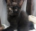 Очень умный, ласковый котенок-мальчик ок. 3-х мес