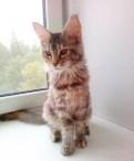 Продаются котята, Подпорожье