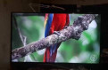 SAMSUNG Ue55h6400ak телевизор 55 дюймов