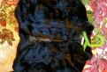 Платья в пол 2018 на каждый день, болеро меховое под норку с длинным рукавом, Всеволожск