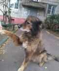 Замечательный пес ищет дом