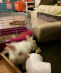 Кролики декоративные вислоухие барашки, Выборг