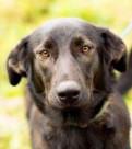 Собака черная, Санкт-Петербург