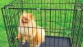 Клетки для собак, кошек с пластиковый поддоном