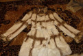 Шуба кролик, элегантное платье для мамы невесты