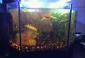 Продам аквариум 32 л