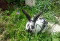 Кролики, Бабочка, и разные породы