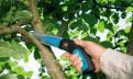 Обрезка(обновление) плодовых деревьев, кустарников, Всеволожск