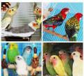 Лучшие Попугаи и декоративные птицы из Питомника