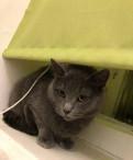 Коты и кошки мышеловы, на предприятие, Санкт-Петербург