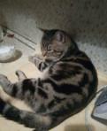 Бенгальский мраморный кот, Каменка