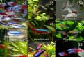Рыбки с разводни, широкий ассортимент в Петергофе